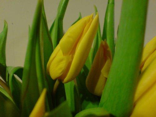 Sony Ericsson - Tulips